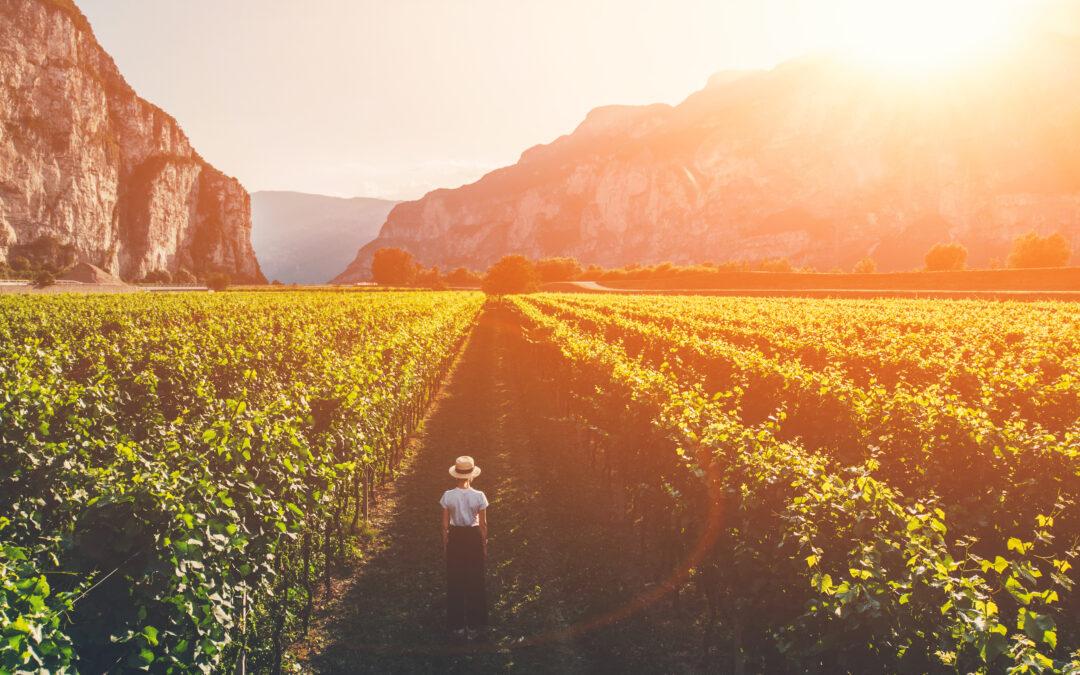 Toscane en zijn Sangiovese druif uit het groene hart van Italië: