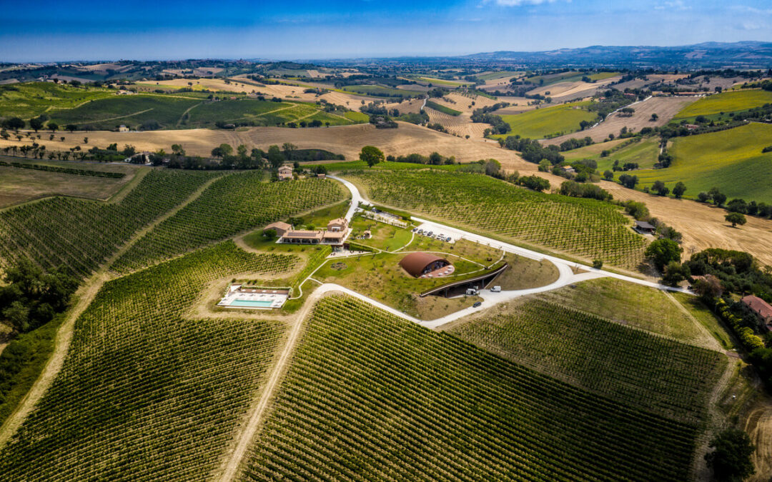 Winery Filodivino
